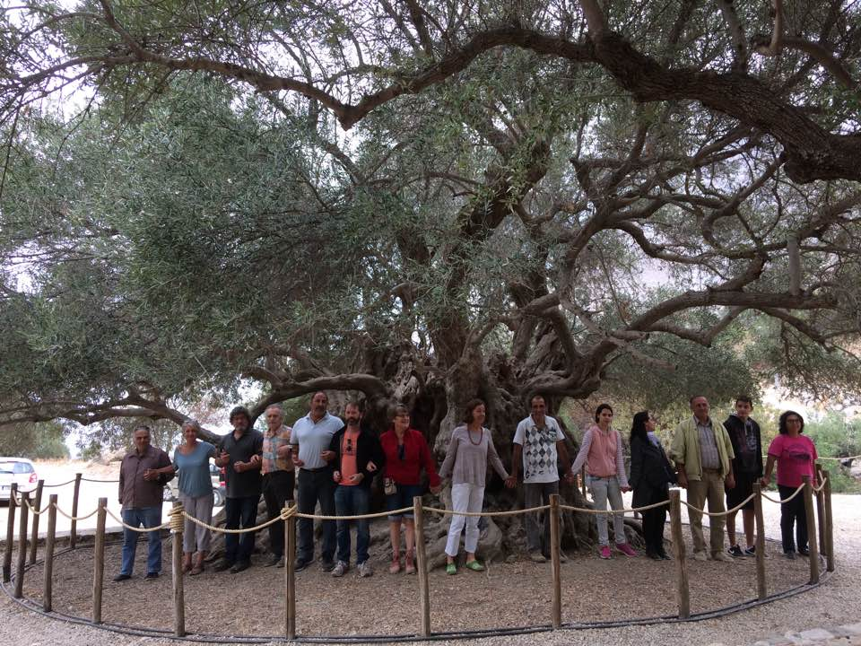 Ancient tree surrounded by a chain of people holding hands